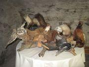 Tierpräparate Konvolut aus Nachlass