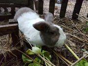 Süßer Kaninchen Mann Alfred sucht