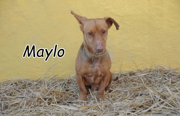 Gehen Sie gemeinsam mit Maylo