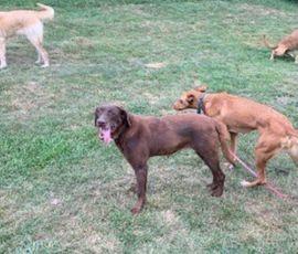 Hunde - Die zauberhafte Csoki sucht aktive