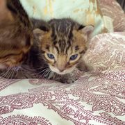 Kitten suchen ein Zuhause wundervolles