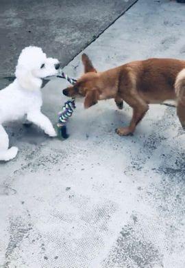 Tierbetreuung - Hundebetreuung Tagesbetreuung