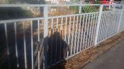 Zaun aus methal zu verkaufen