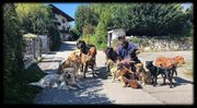 Hundetraining Hundeschule Hundetrainer Hundebetreuung Gassi