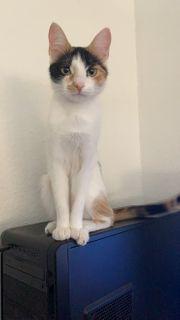Katze vermisst in Neu-Isenburg