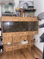2 Leopardgeckos mit Terrarien abzugeben