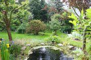 Suche Garten- Schrebergarten