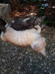 Süßes Katzenkind