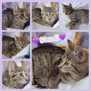 Baby Katze Kitten Skadi geimpft