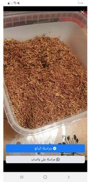 Tabak günstig