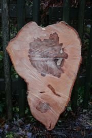 Holzscheiben Ideale Dekoration Hartholz aus