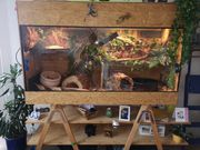 Verkaufe Terrarium mit kompletter Ausstattung