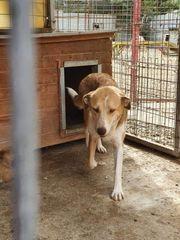 Liebevolle Hundemama sucht ein Zuhause