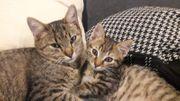 Katzenpärchen Tina und Nelson suchen