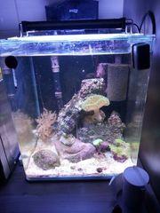 meerwasser 30l nano