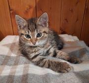 Kleines getigertes Katzenmädchen