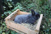 Kaninchen Möhrchen ca 3 Jahre