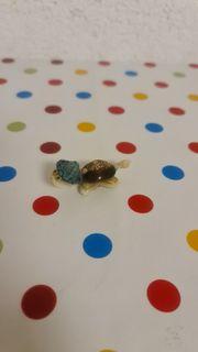 Muschel Schildgröte