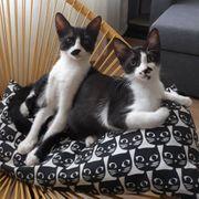 Katzenkinder Fredie und Frieda warten