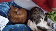 Katze 2 Schmusekater