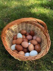 Frische Eier 10 Stück