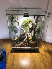 Geckos Terrarium