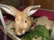Kaninchen Junge sucht neues Zu