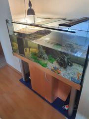 Aquarium ca 130x60x60