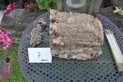 Korkrinde Korkeiche 22 cm lang