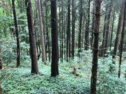 Waldstücke zu verkaufen