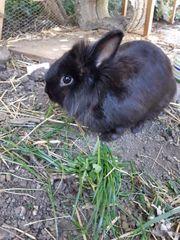 Hasen Kaninchen