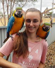 2 Papageienpapiere die für die