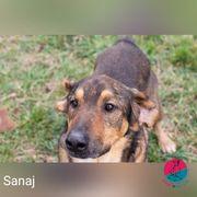 Sanaj - sucht seine Familie