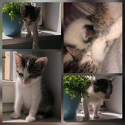 Kater Baby Theo 7 Wochen