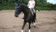 Suche Braves Pferd als Freizeitpartner