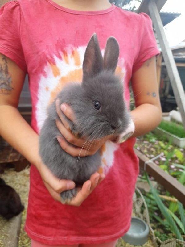 verschmuste kaninchen babys suchen ein Zuhause