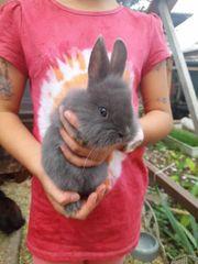 verschmuste kaninchen babys suchen ein