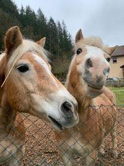 Biete Reitbeteiligung für 2 Pferde