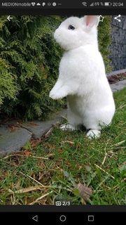 Tolles Original Hermelin Kaninchen Mädchen