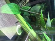 Taggecko