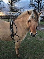 Pferd sucht Reiter Reitbeteiligung
