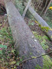 10 Festmeter Brennholz - bei 83527
