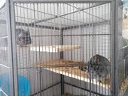 Chinchilla Pärchen mit Käfig