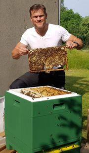 Bienenvolk Bienenableger Carnica Ableger 2021