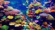 Meerwasser LPS und Weichkorallen suche