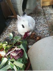 Kaninchen gesucht