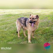 Wichtel - Kleiner Name sanfter Riese