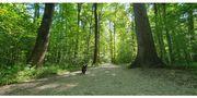 BIETE fexible Hundebetreuung und Gassi-Service