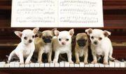 Klavierunterricht - Piano Lessons