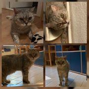 Taube Katze Tapsy 16 Jahre